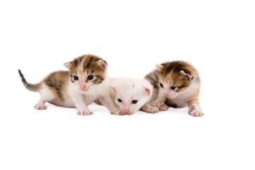 three kittens (3 weeks), isolated