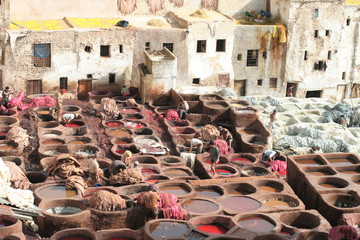 Leather soaks in Fez, Morocco