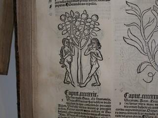 adam und eva in einem mittelalterlichen buch