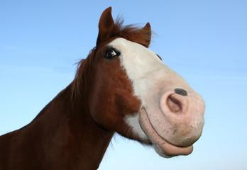 Foto auf Leinwand Pferde Grinsebacke
