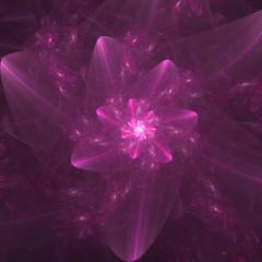 fucshia floral fractal