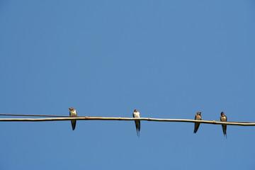 Quattro uccellini su un cavo contro il cielo