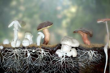 Pilze im Querschnitt