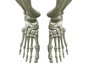 Right and Left Foot Bones