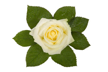valentines, flower