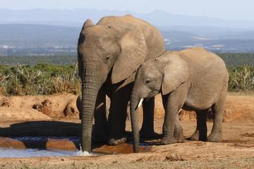 Elephant mom showing calf some tricks