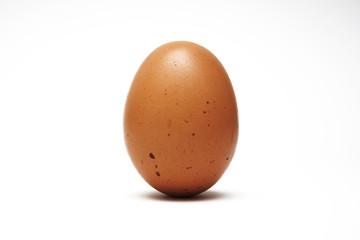 egg, vertical position