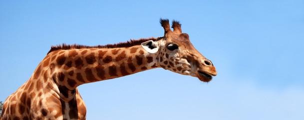 Poster de jardin Girafe Bannière Girafe