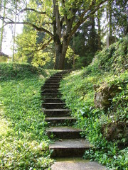 Foot Steps In The Country Side