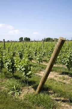 Winery on Long Island