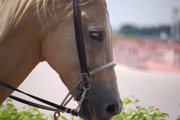 Outrider Horse Portrait