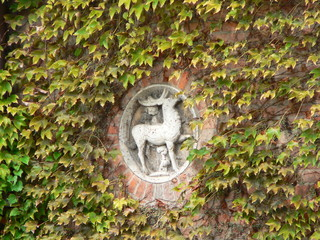 Deer in Ivy, Hungary