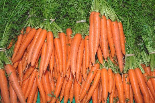 carottes 2