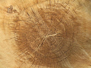 Acrylic Prints Firewood texture Growth rings