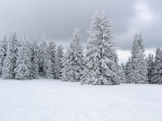 Forest in white