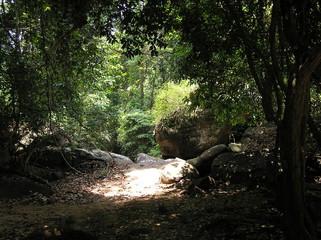 Kambodscha - Dschungel