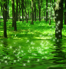 Magic forest near the river