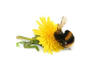 Gorging on Nectar