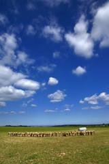 les moutons et le ciel
