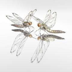 dragonflies-meeting