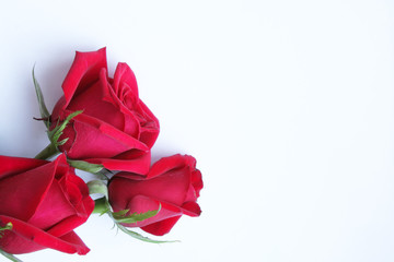 Three red roses on white paper