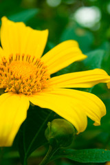 Beautiful Yellow Flower in extreme close up view