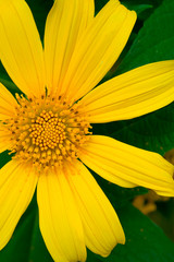 Beautiful Yellow Flower in close up view