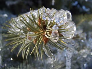 iced branch 2
