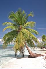 Palm tree on tropical beach against deep blue sky