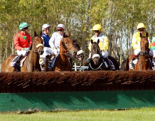 jockeys montrant une haie à leurs chevaux
