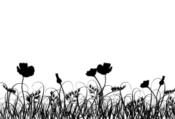 Grass and poppy, vector
