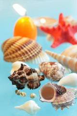 Shells on of blue background