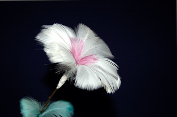 flower of feather