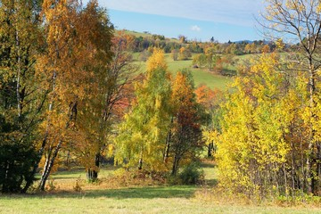 Picturesque autumn landscape trees and bushes