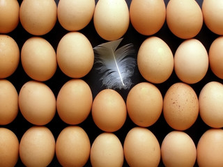 lines of eggs