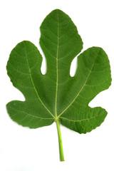 Fig leaf