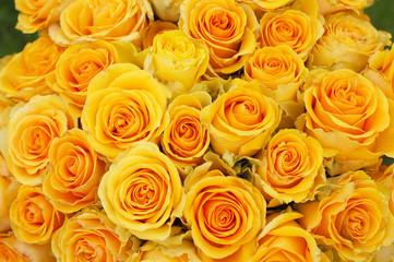 backdrop of beautiful yellow  roses