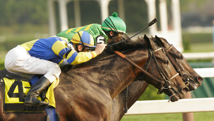 Close-Up of Neck and Neck Horse Race