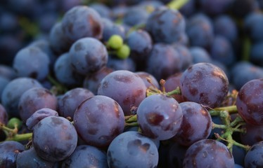 Purple Grapes Closeup