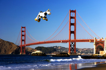 Fototapete - cow over the golden gate