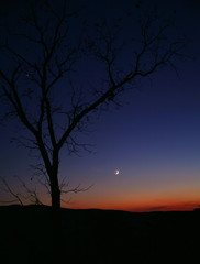 Tree Silhouette at Sunset with Moon