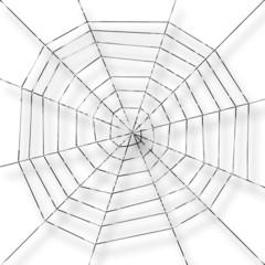 toile d'araignée,