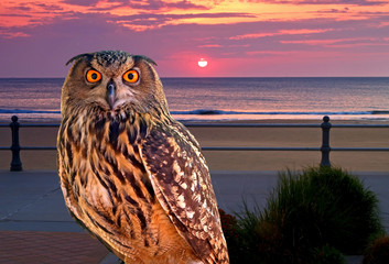 an owl at an early morning
