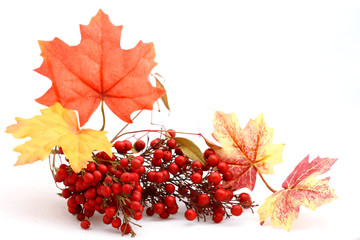 Red berries and leaves