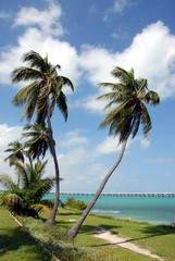 Palm Trees Key  West Florida