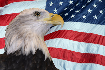 Deurstickers Eagle Patriotic Bald Eagle