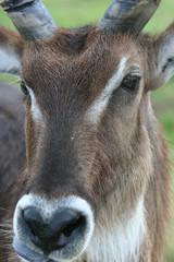 ANIMAL FACE CLOSEUP