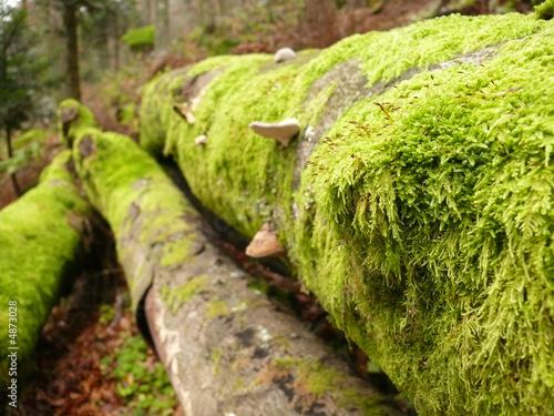 Souche champignons et mousse sur l 39 arbre photo libre de - Mousse sur les arbres ...