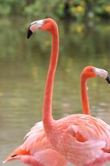 THOUGHTFUL BIRDS PINK FLAMINGO