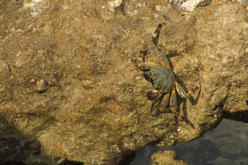 Crab at mission rock
